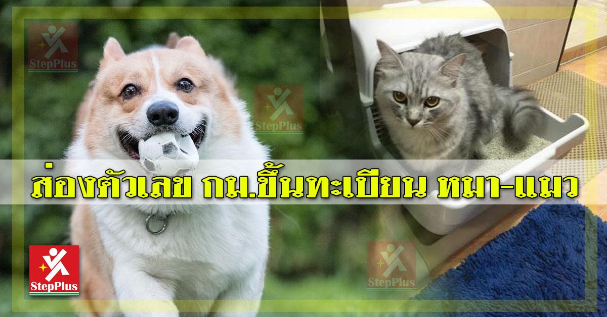 ขึ้นทะเบียน 'หมา-แมว'